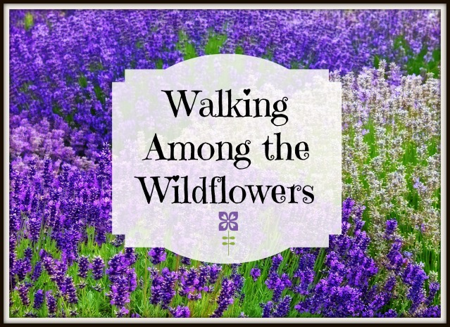 walking among the wildflowers