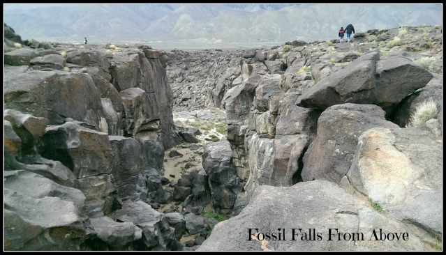 fossil falls from above