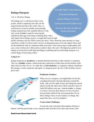 Kaluga Sturgeon_With Questions_BookwormHomeschool_Page_1